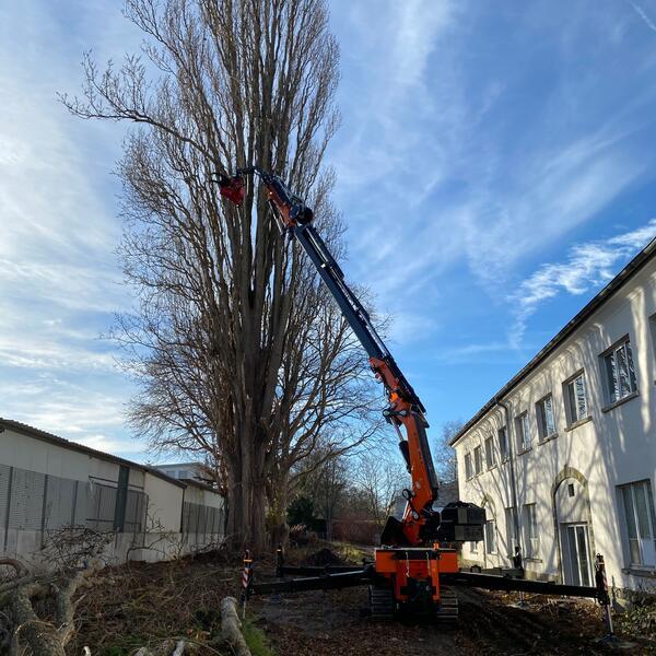 Wenn unter dem Baum nichts beschädigt werden soll, ist der Fällkran ideal