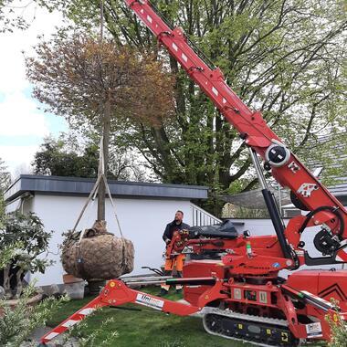 Baum mit dem Kran in die richtige Position bringen
