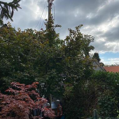 Im Gebüsch des Nachbargrundstücks steht der mast