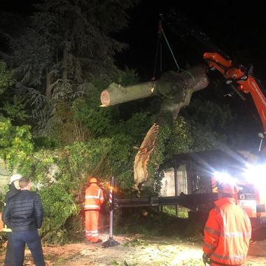 Baum mit Kran angehoben